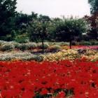 Der Botanische Garten in Solingen
